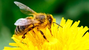 new-pesticides-linked-bee-deaths.si